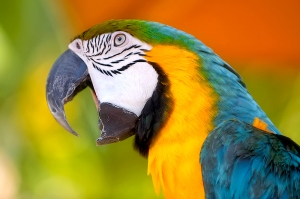 Don't learn to talk French  like a Parrot!